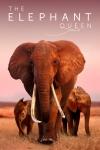 Slonia kráľovná film poster